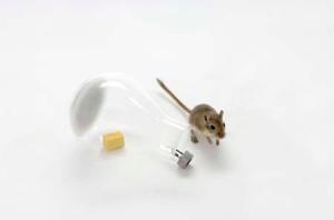 mousetrap1