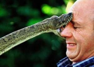 snake_bite